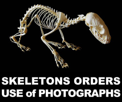 4-0-Boton Skeletons Orders y Use of Photographs