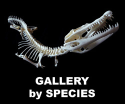 Boton Gallery by Species