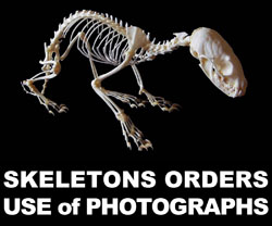 Boton Skeletons Orders y Use of Photographs