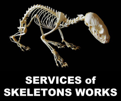 4-1- Boton Services of Skeletons Works